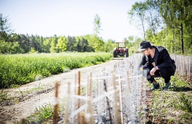 Teodling på Gotland, Bra Koll